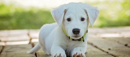 puppy-1903313_640